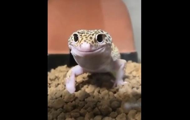 Видео с улыбчивой ящерицей стало интернет-хитом