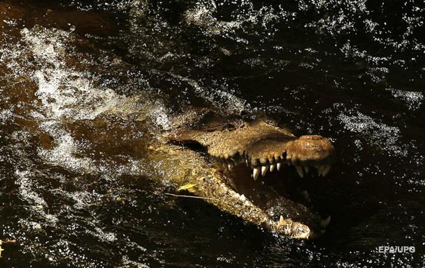 Мужчина ради снимка потянул крокодила за хвост