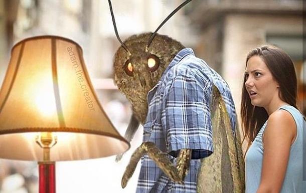 Пугающее фото мотылька превратили в вирусный мем