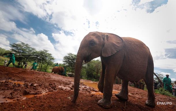 В Индии туристы еле сбежали от разъяренного слона