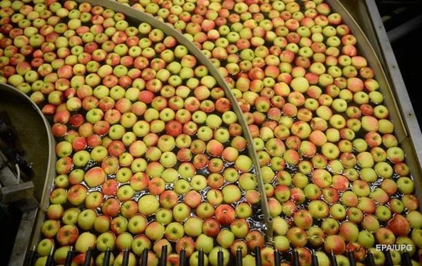 Україна експортуватиме яблука в Індію