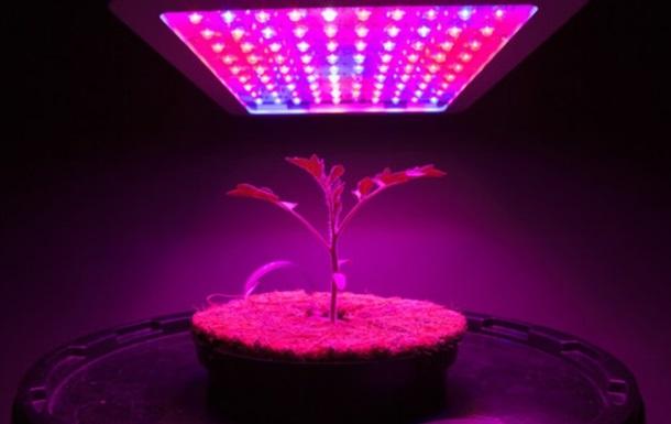 На МКС будут выращивать каннабис