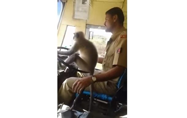 Индиец посадил обезьяну за руль автобуса