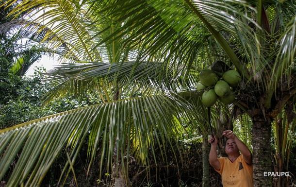 Обезьяна убила пенсионерку кокосом
