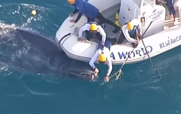 Біля берегів Австралії врятували дитинча кита