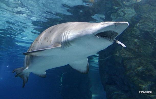 Рыбак поймал акулу и едва не лишился руки