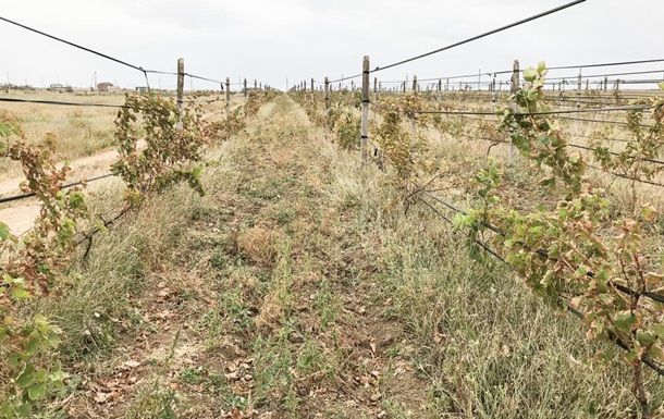 В МинТОТ заявили об уничтожении виноградников в Крыму