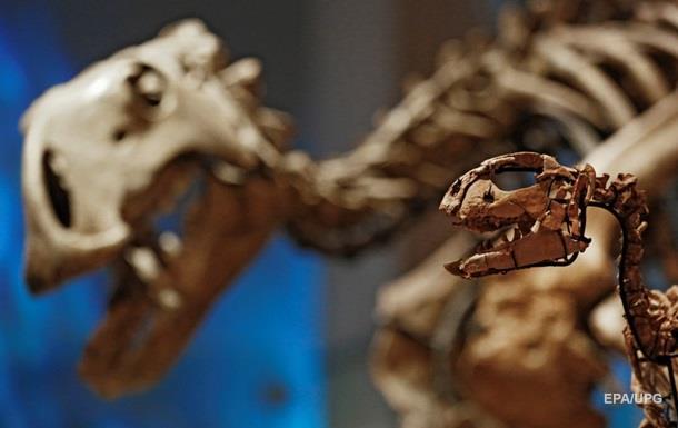 У пустелі Гобі знайшли великий скелет динозавра - ЗМІ