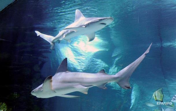 Китаянка упала к голодным акулам и выжила