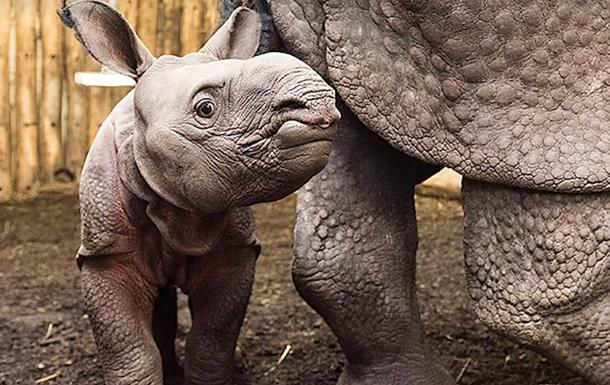 Премьер-министр Венгрии  усыновил  носорога