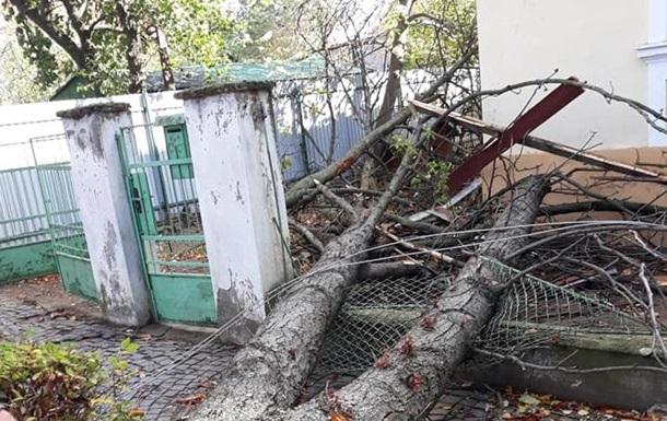 В Ужгороде сильный ветер повалил деревья