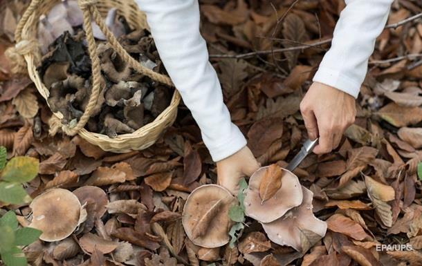 В Запорожской области грибами отравились пять человек