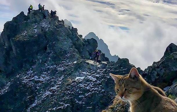 Альпиниста на вершине горы встретил домашний кот