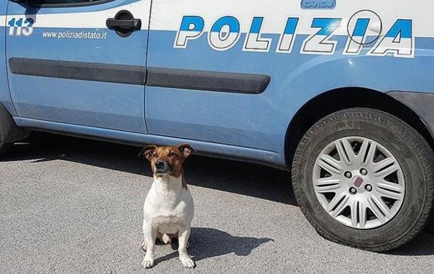 Итальянская мафия объявила награду за полицейскую собаку