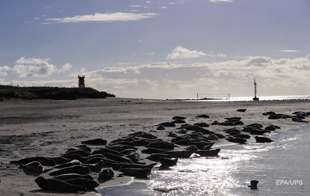 В Шотландии мужчина застрял на скале, спасаясь от тюленей