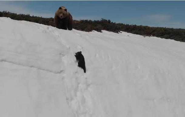 Оператор напугал медвежонка и разозлил Сеть