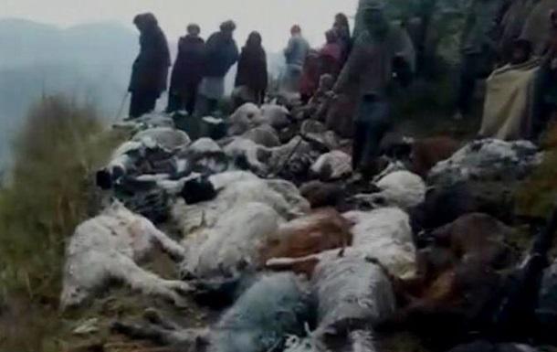 Молния убила сто овец: фото