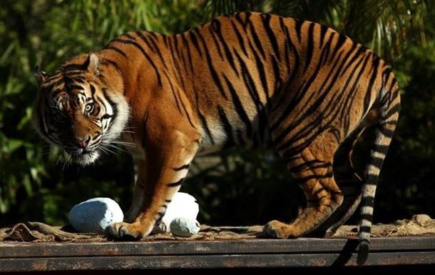 Доклад WWF о вымирании животных истолкован неверно - СМИ