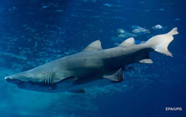 Злодій сховався від поліцейських в річці з акулами