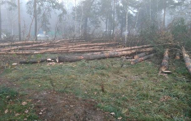В Киеве предотвратили незаконную вырубку леса