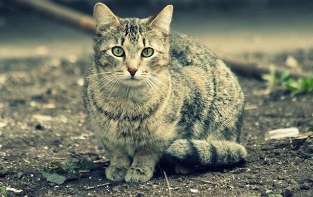 Жителя Полтавской области за увечья кота посадили на шесть лет