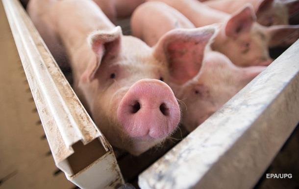 Україна в чотири рази збільшила імпорт свинини