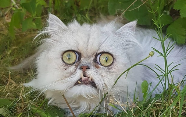 Фото  самого страшного  кота стали вирусными