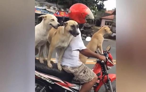 На Філіппінах собак привчили їздити на скутері
