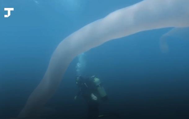 Океанський черв як. Дайвер зняв рідкісну істоту
