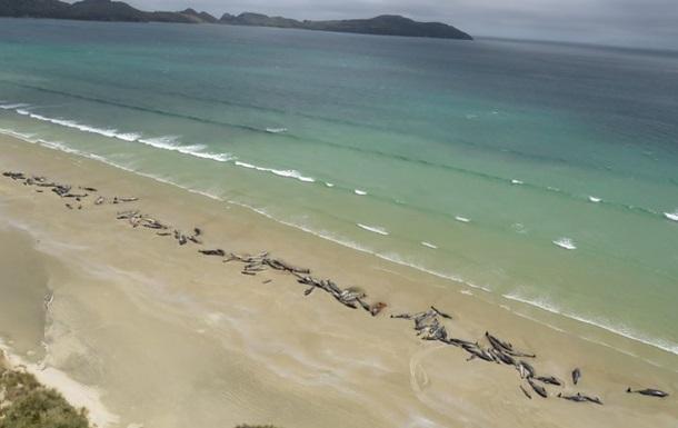 У Новій Зеландії на берег викинулися близько 150 дельфінів