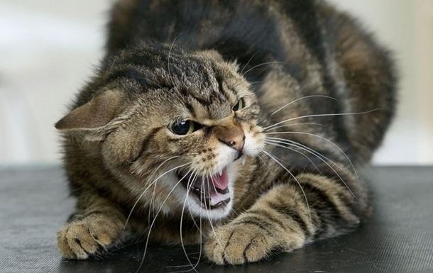 В Ровенской области бешеный кот покусал двух человек