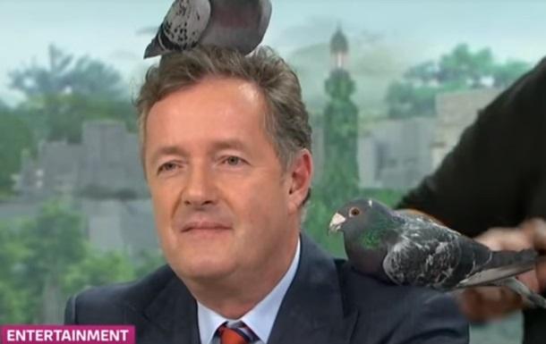 Голуби сорвали прямой эфир британского ток-шоу