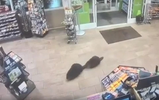Бобры сходили в магазин  за покупками  и попали на видео