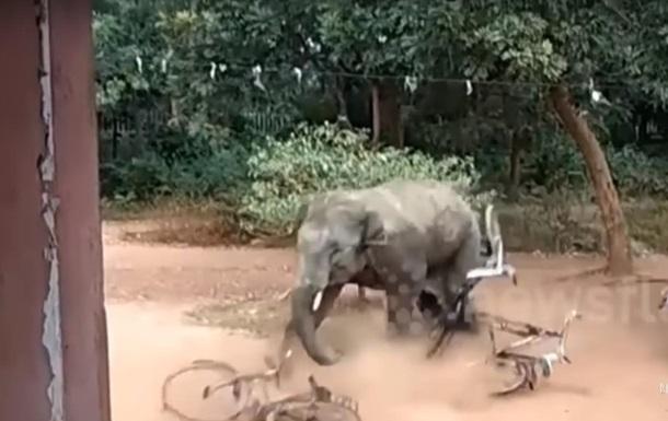 В Індії слон травмував трьох людей