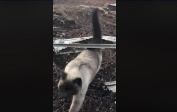 Кошка месяц ждала хозяев возле сгоревшего дома