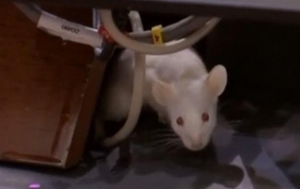Колумбийские депутаты забросали коллег крысами