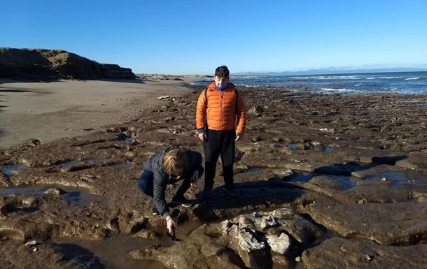 В Аргентине нашли останки древнего гигантского ленивца