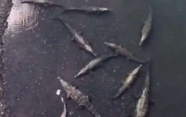 Турист впустив смартфон в обжиту крокодилами річку