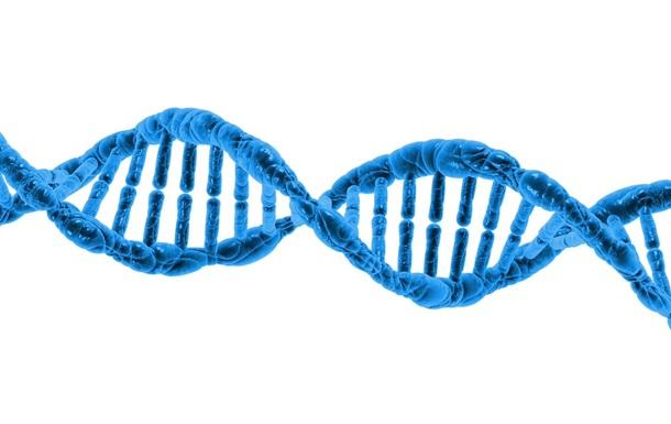 Ученые выяснили причину женского долголетия