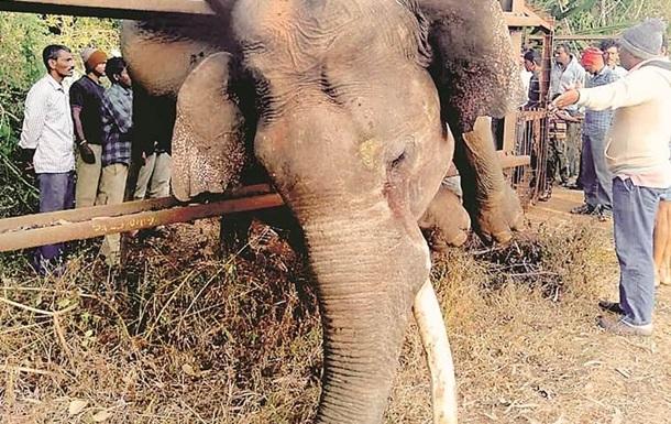 Слон задохнулся, застряв на фермерском заборе