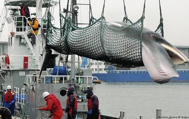 Японія виходить з Міжнародної китобійної комісії