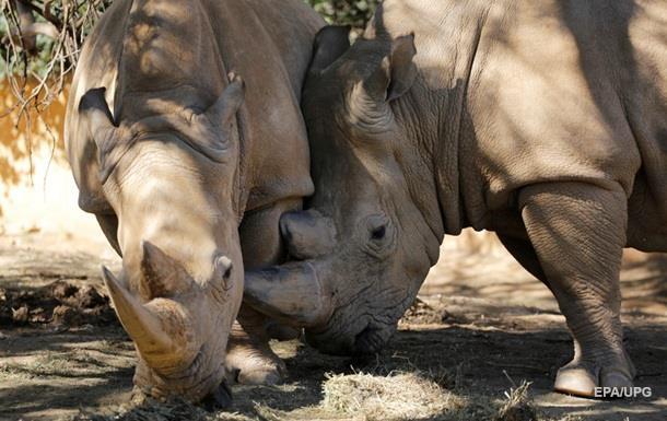 В зоопарке США ребенок упал в клетку с носорогами