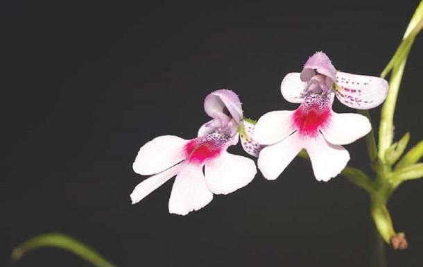Ученые нашли новый вид орхидей