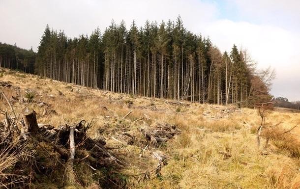 Підсумки 02.01: Лісовий рекорд і валютні новації