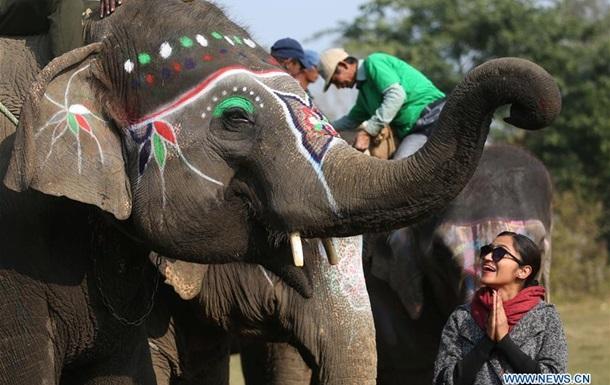 У Непалі провели конкурс краси для слонів