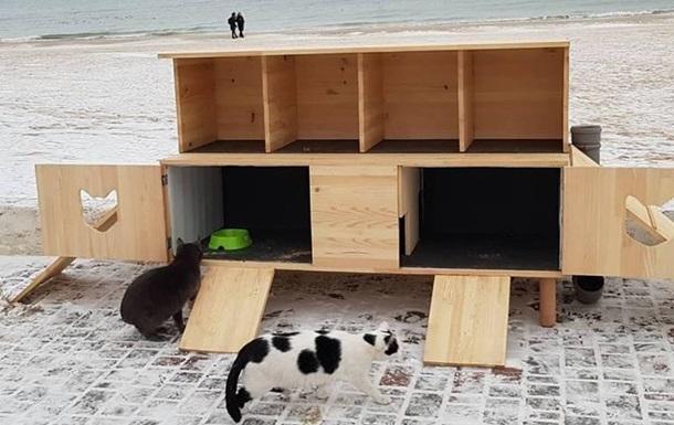 В Одесі збудували  котопункт  для бездомних котів
