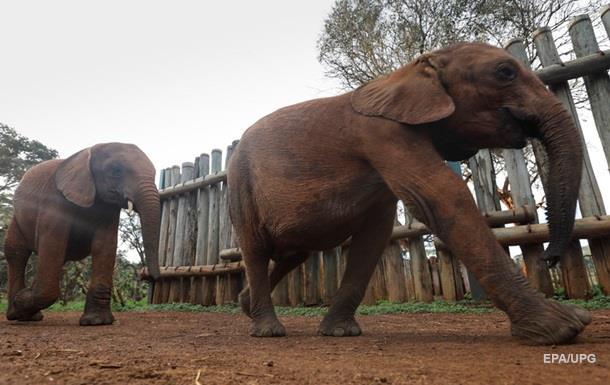 Мужчина пытался загипнотизировать слона и погиб