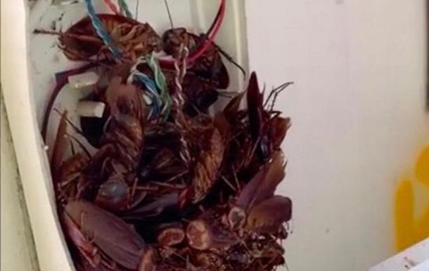 Австралієць знайшов телефон з десятками тарганів