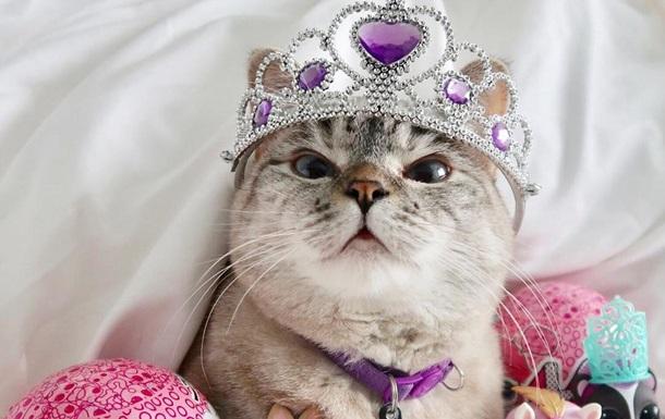 Знайдений найпопулярніший кіт в Instagram
