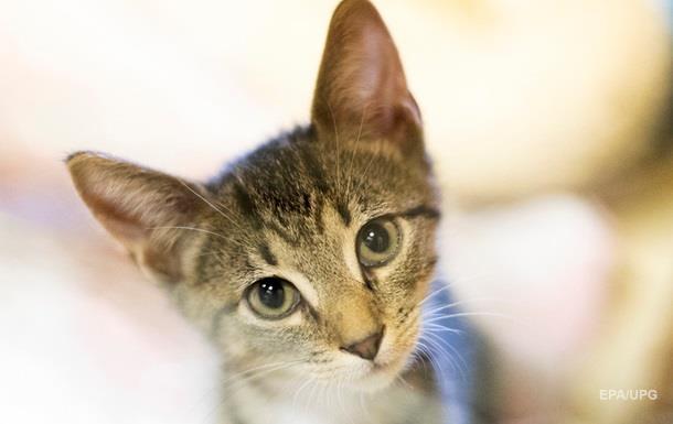 Відео з  балакучою  кішкою стало вірусним